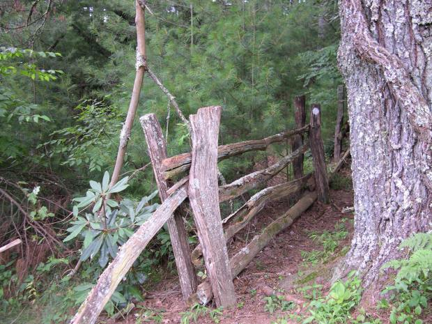 If you drive along the Blue Ridge Parkway, look for the old stacked rail fences made out of chestnut. They are slowly replaced by pressure treated fences, but many old fences still remain.
