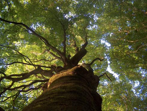 sxc-hu-all81-under-the-spreading-chestnut-tree